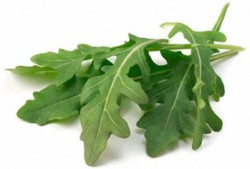 Rucola received a lot of interest