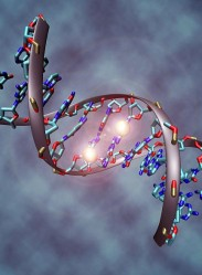 DNA methylation plays an important role for epigenetic gene regulation in development (Photo: Wikimedia)