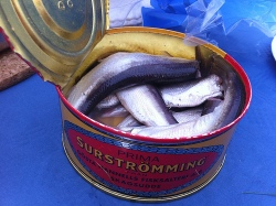 Surströmming is a foul smelling fish (Photo: Stefan Leijon)
