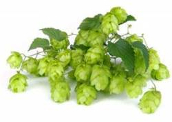 Hops provide healthy chemicals