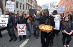 Broad public concerns about GM foods