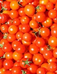 The healthy tomato