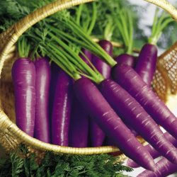 ... or purple carrots ...