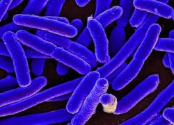 microbiomeniaid